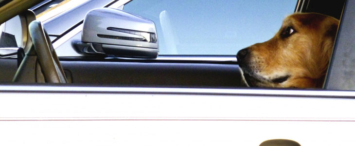 cane-macchina-guida