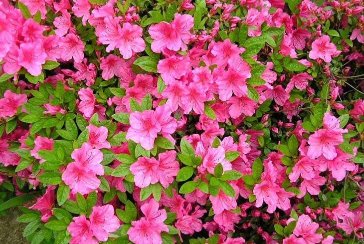 Il significato delle piante cosa sapere per non sbagliare - Cosa si intende per prima casa ...