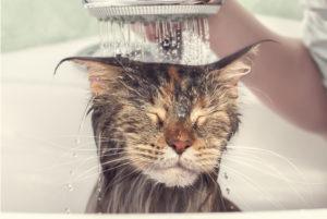 Gatti e tolettatura fai da te: ecco dove acquistare i prodotti giusti